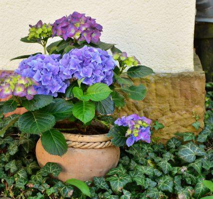 Sklep z roślinami - jak wybrać odpowiedni?